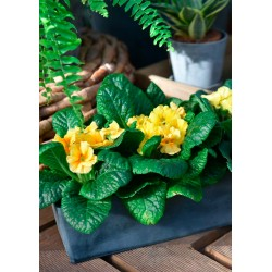 Jardinière balconnière pot de fleurs plastique recyclé fleurie